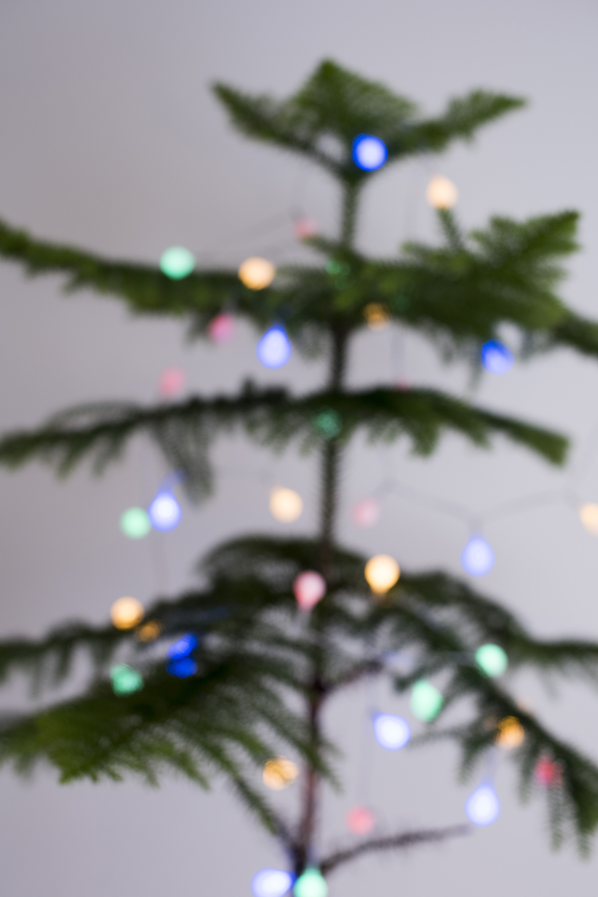 Soft focus natural evergreen pine or spruce Christmas tree decorated with shining colorful round lights