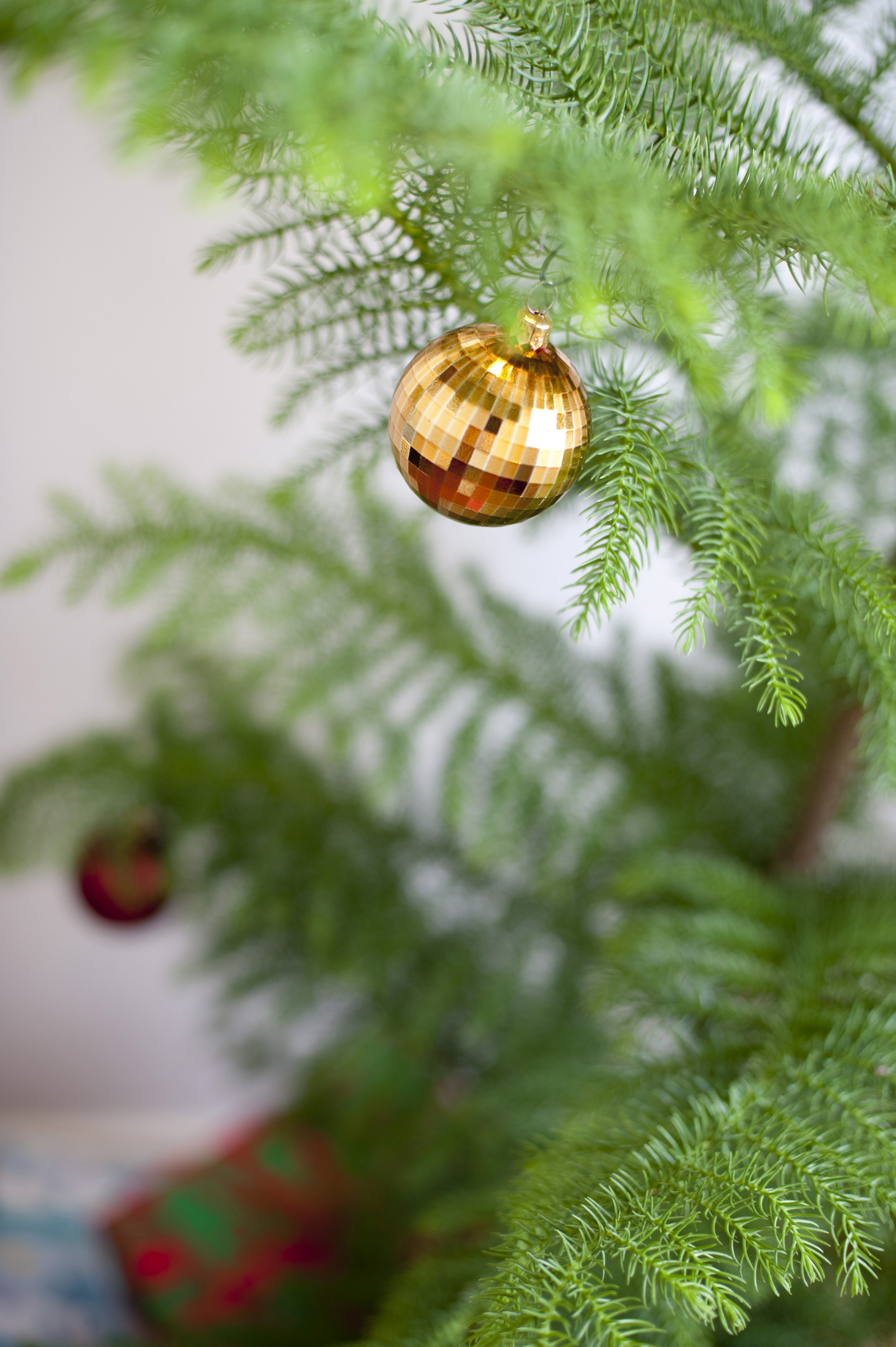 Single shiny metallic gold bauble on a natural pine Christmas tree with selective focus and copyspace for your seasonal greeting