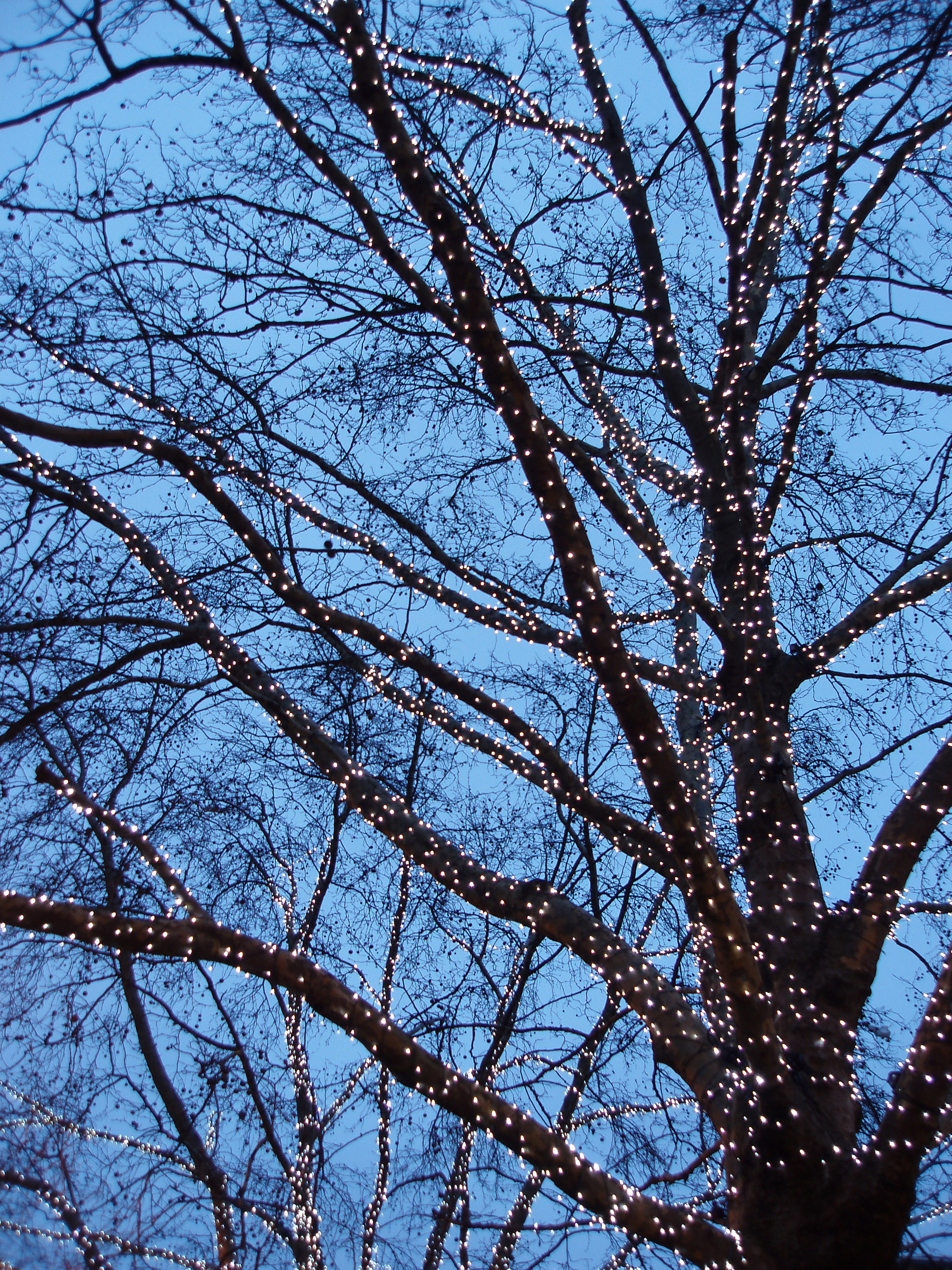 a deciduous tree covered in christmas lights brightens a dark winter day