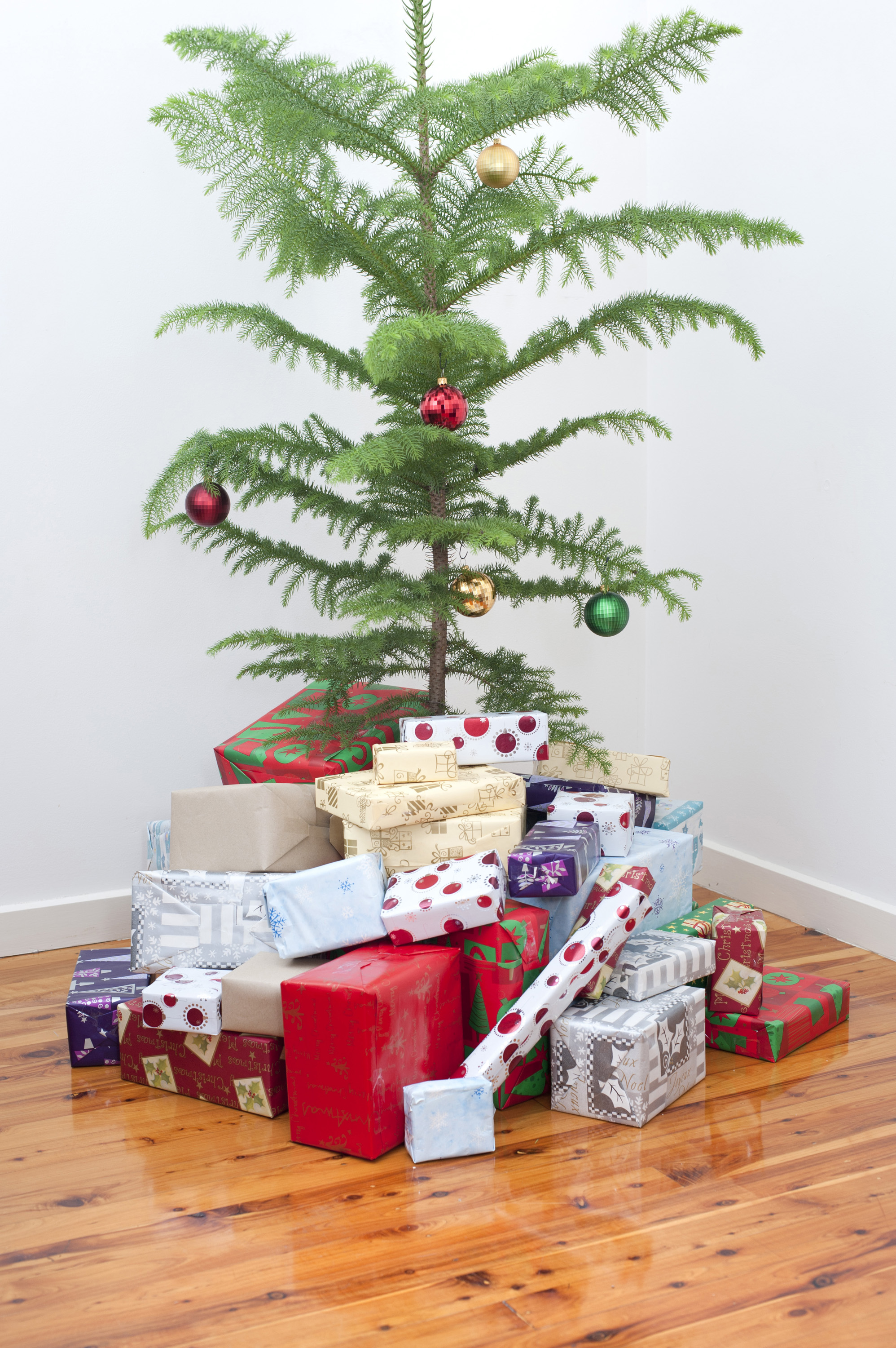 Modern Christmas celebration with a simply decorated natural pine tree and mass of colourful gifts and presents below
