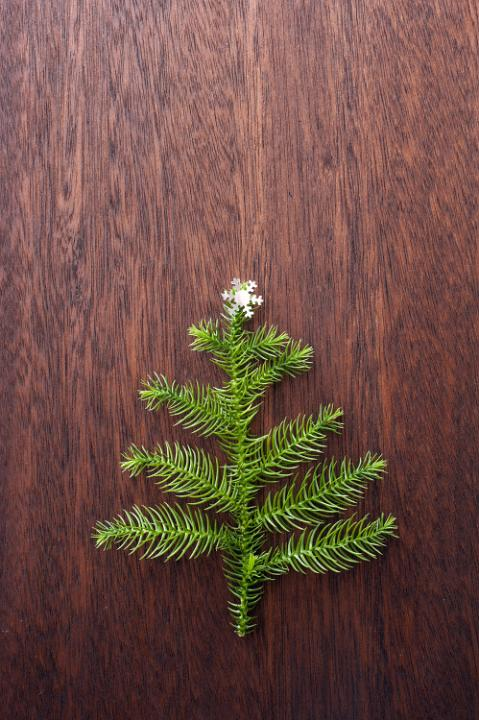 Photo Of Fir Tree Branch Concept Free Christmas Images