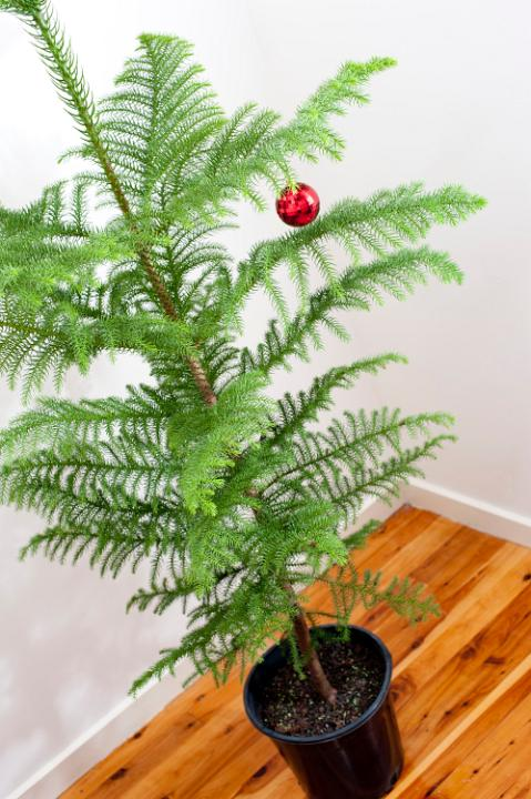 photo of sparsely decorated christmas tree