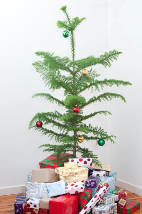 Decorative Pine Trees Indoors