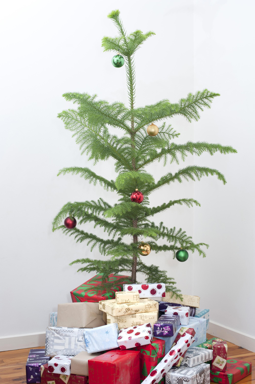 Christmas Tree Kinds