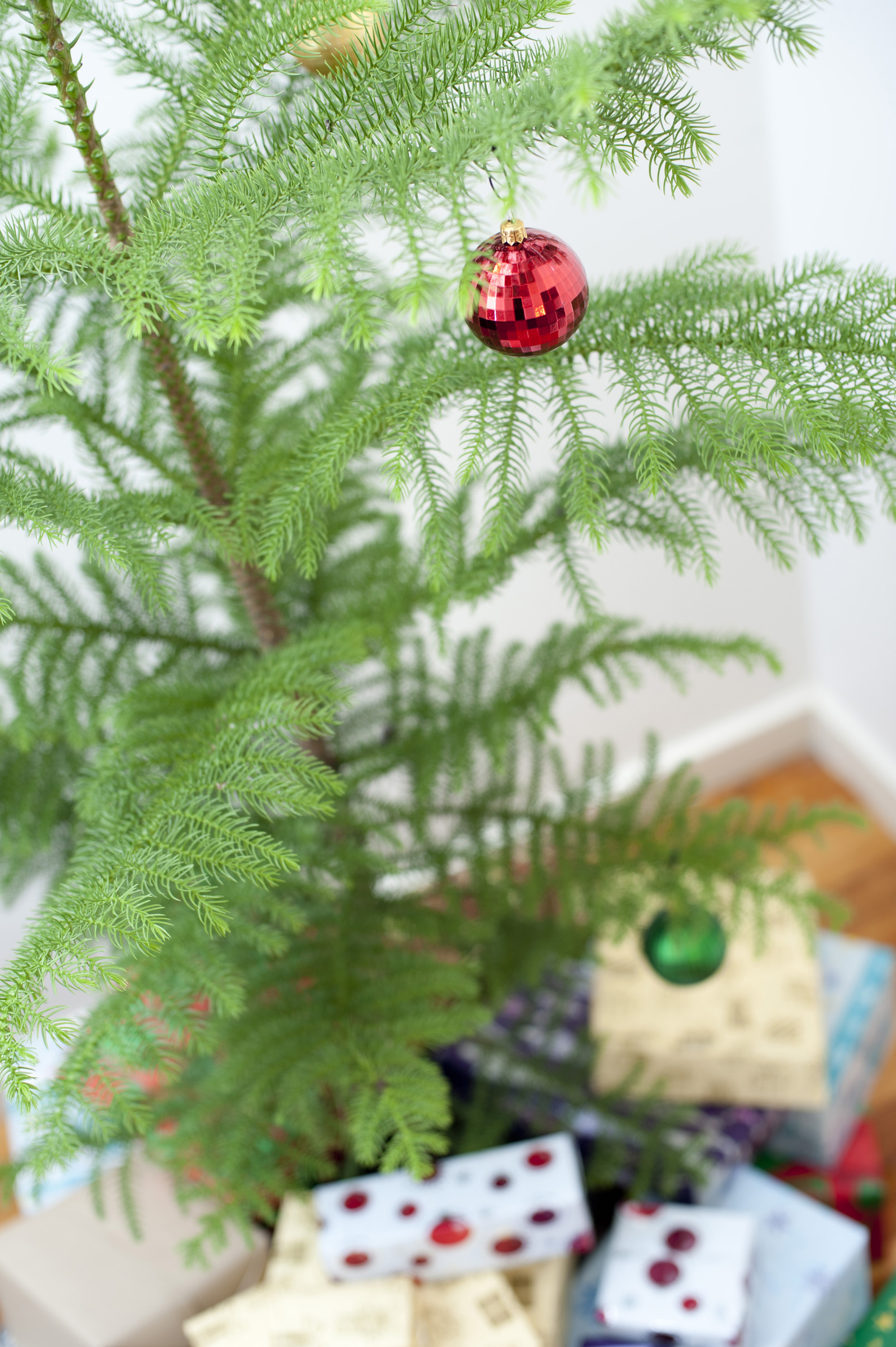 Single shiny red bauble on a natural pine Christmas tree surrounded by colourful gifts, focus to the ornament
