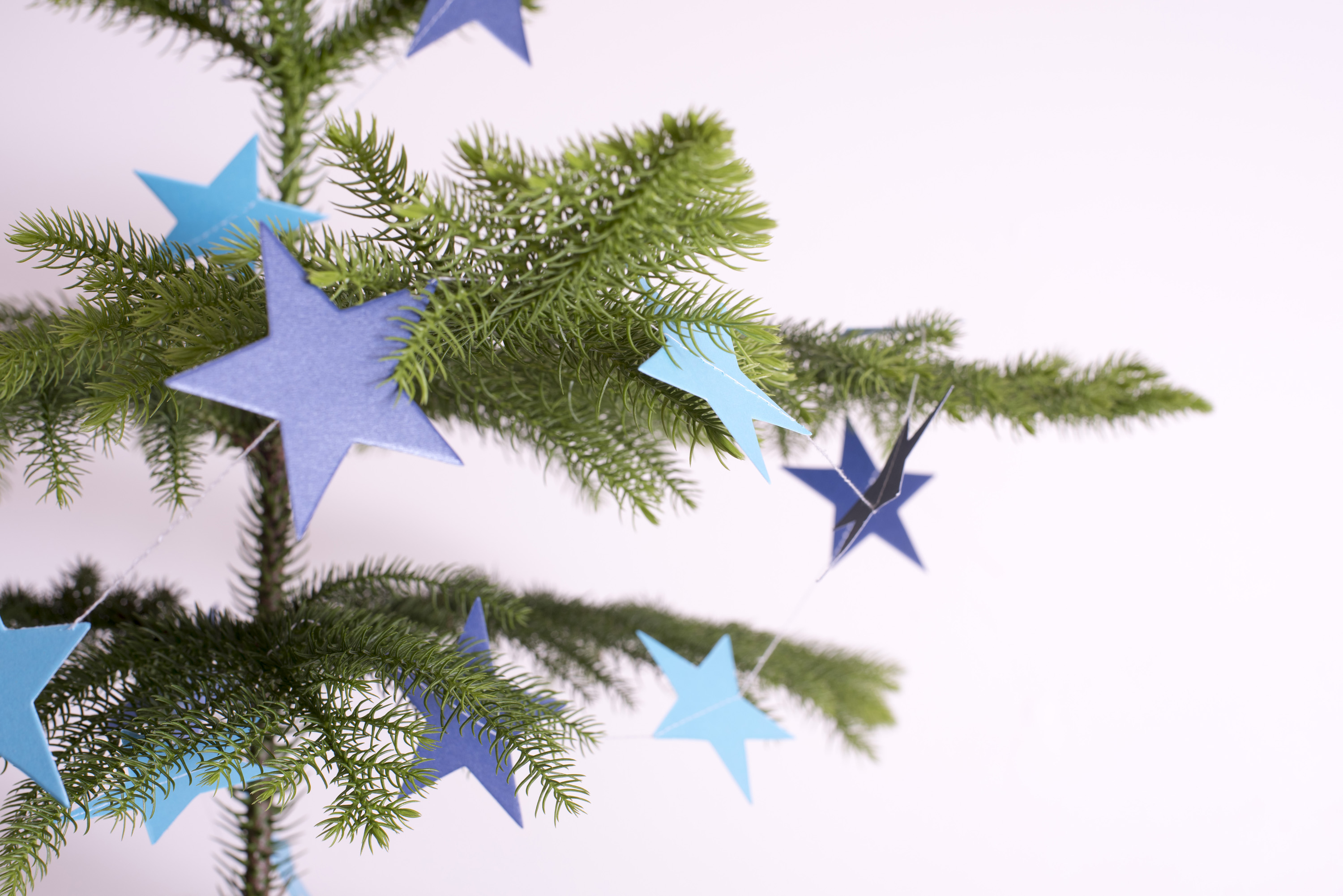 Close up Christmas tree branch with blue star shaped decorations.