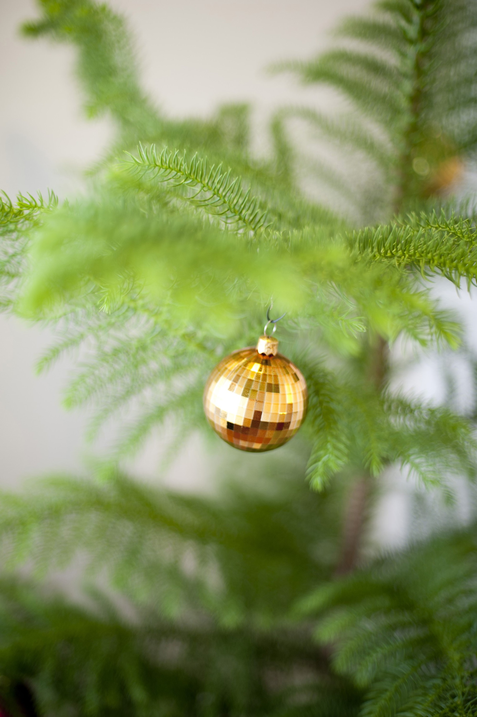 Golden bauble hanging on a natural evergreen pine Christmas tree to celebrate Christmas and the festive season