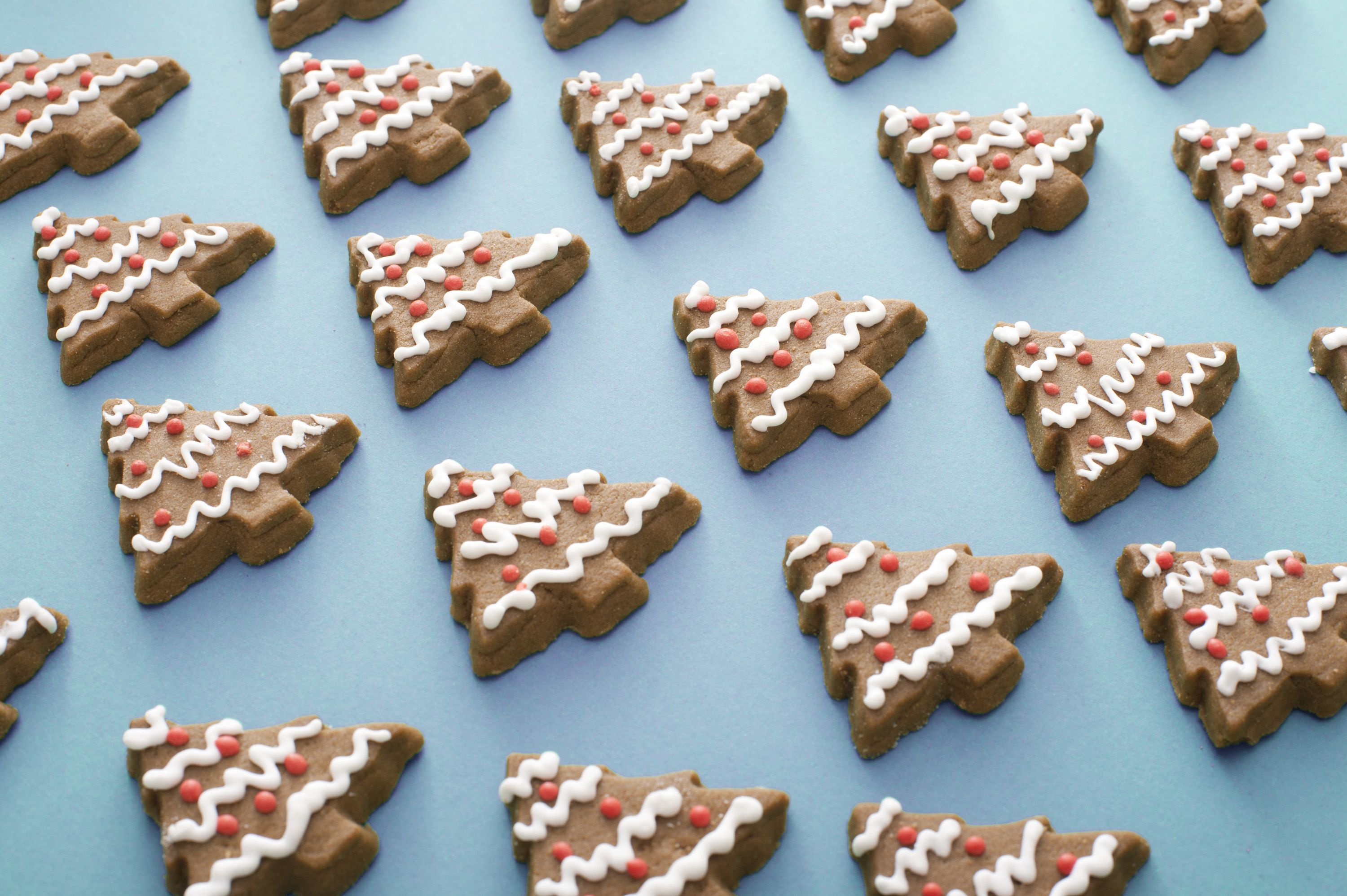 Cool blue background of decorated gingerbread Christmas trees arranged in neat rows for a full frame view of traditional Xmas seasonal fare