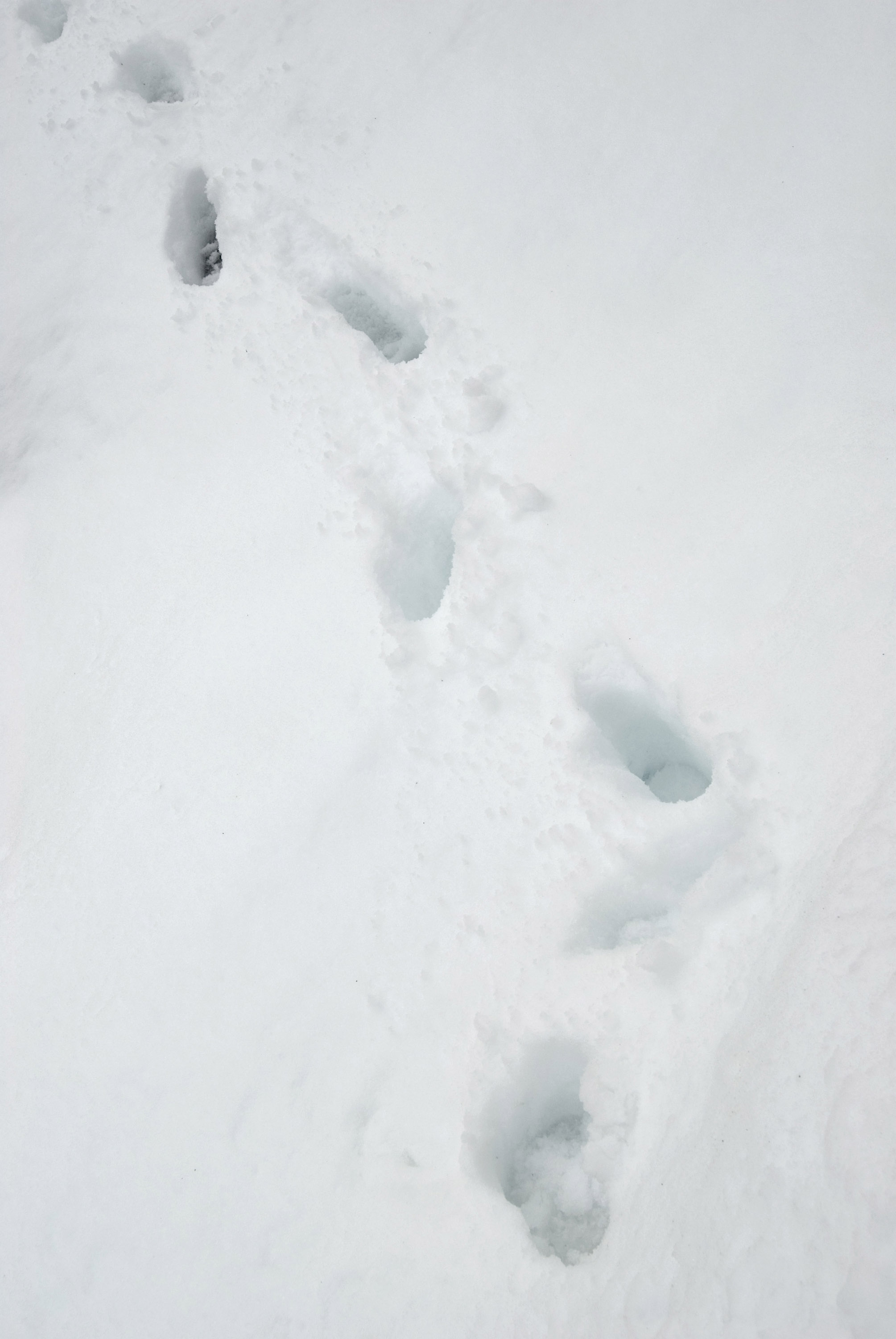 a line of foot prints makng their way through deep fresh snow