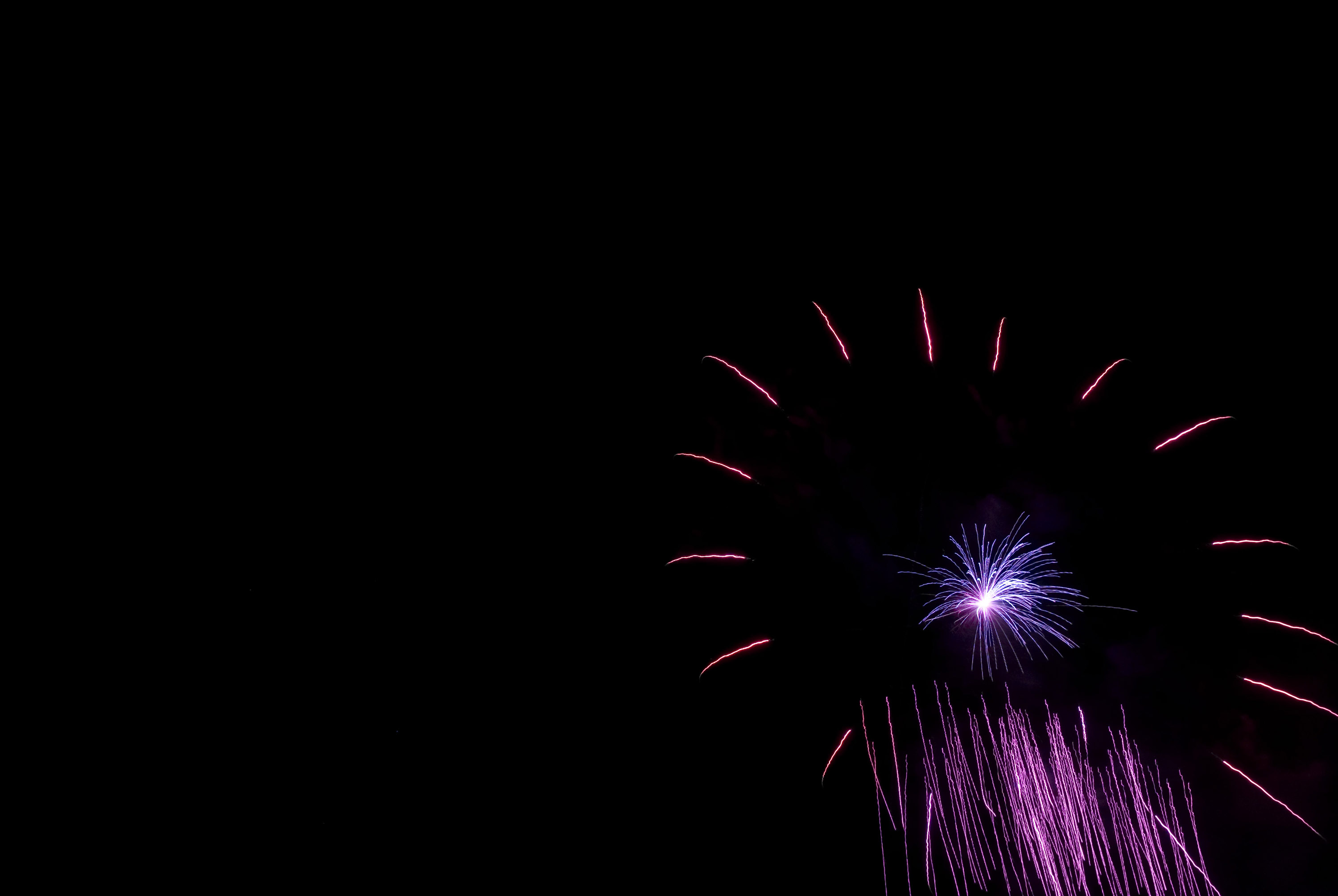 purple trails of light frozen in time as they explode from a firework rocket