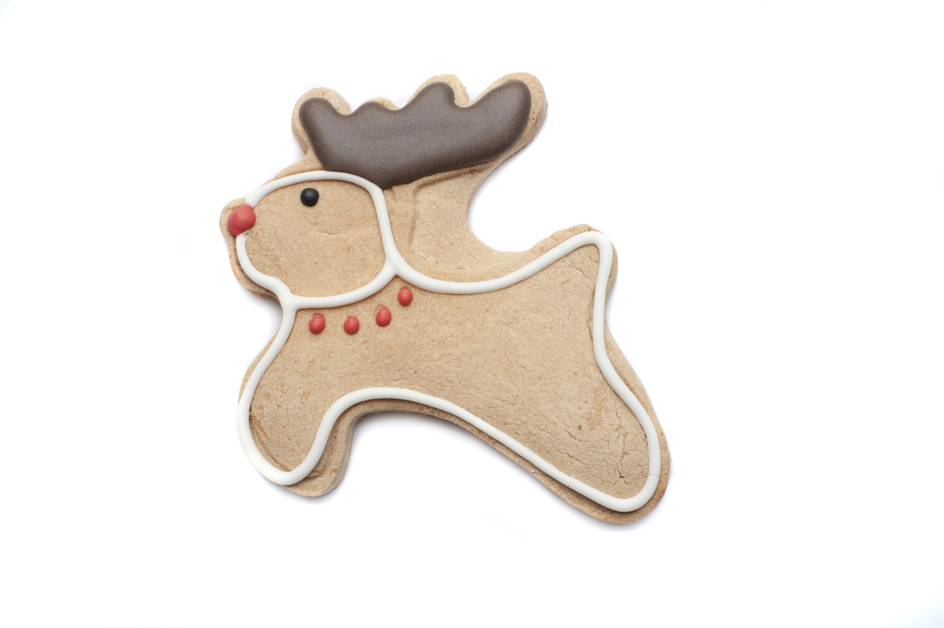 Reindeer Christmas gingerbread cookie with a cute red nose and decorated chocolate antlers isolated on white