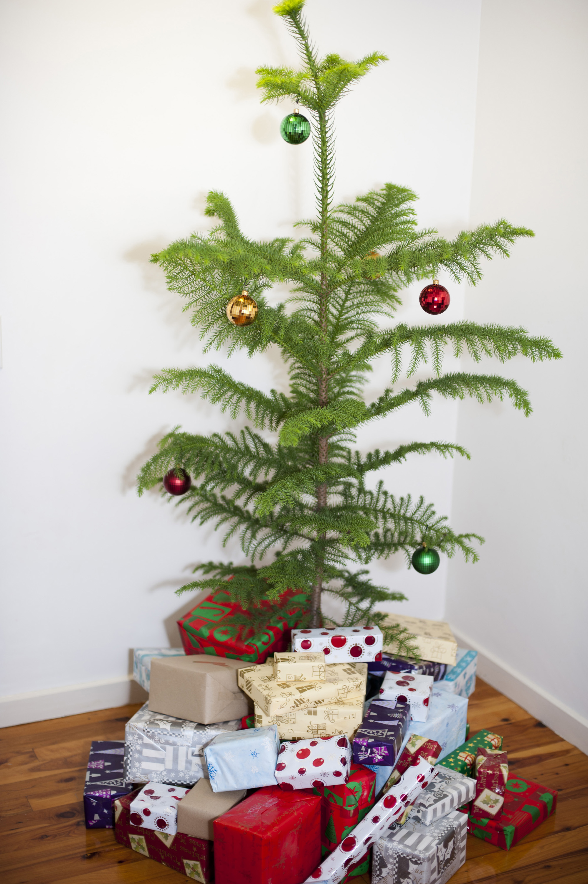 Decorated evergreen natural pine Christmas tree surrounded with colourful presents gift-wrapped in pretty patterned paper