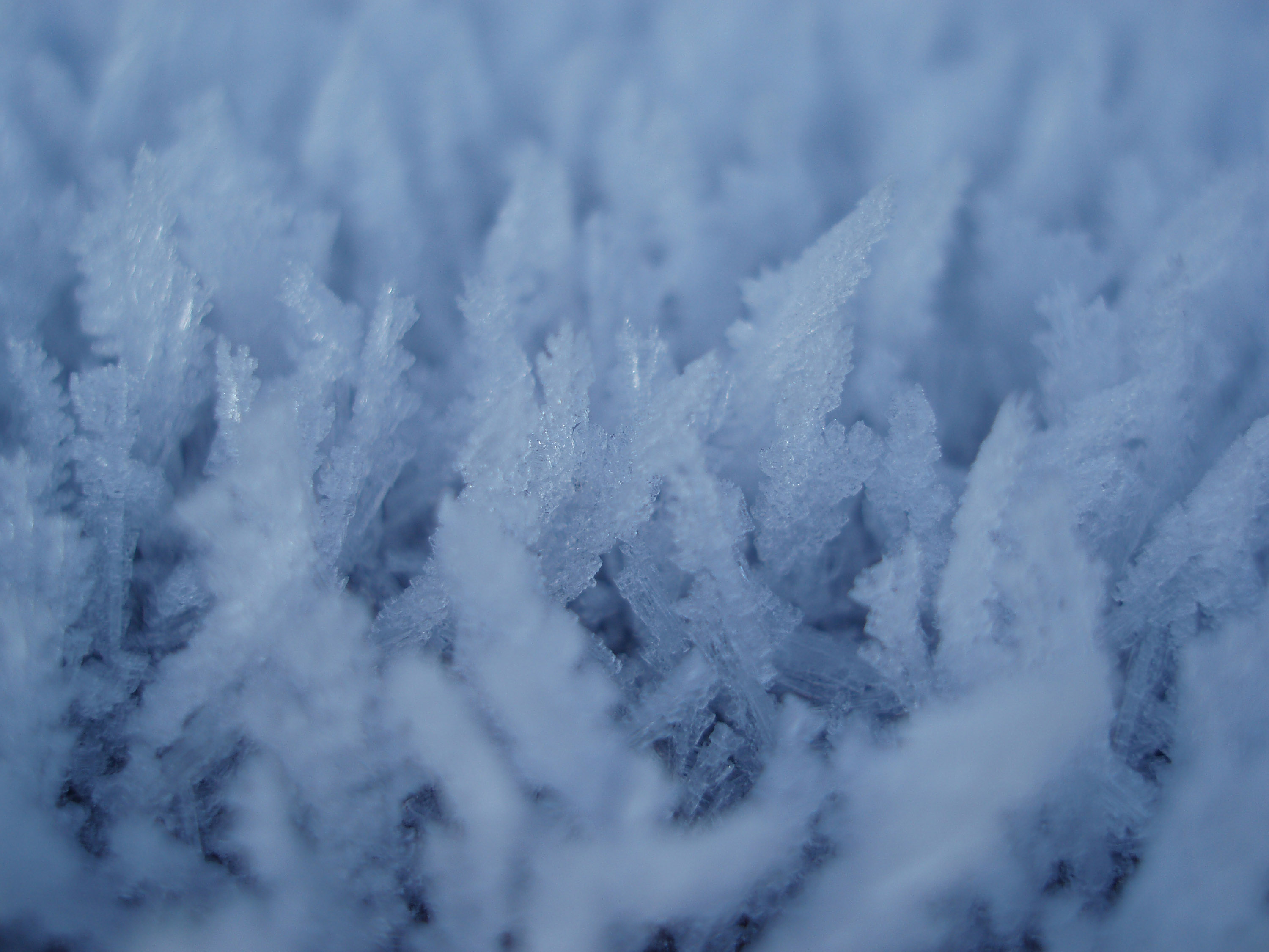 ice crystals grown over several frosty winter nights