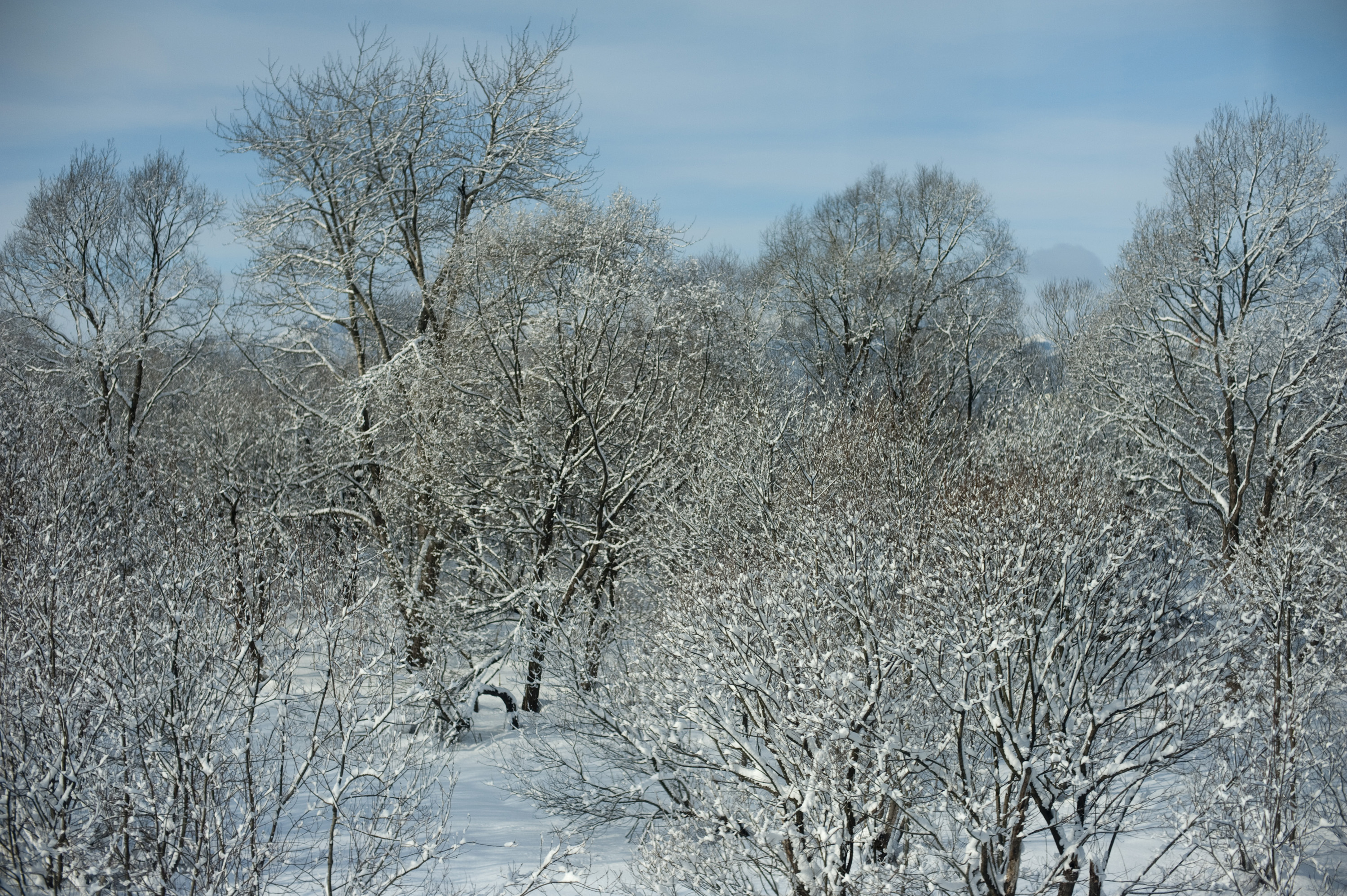 a view across a snow covered woodland landscape