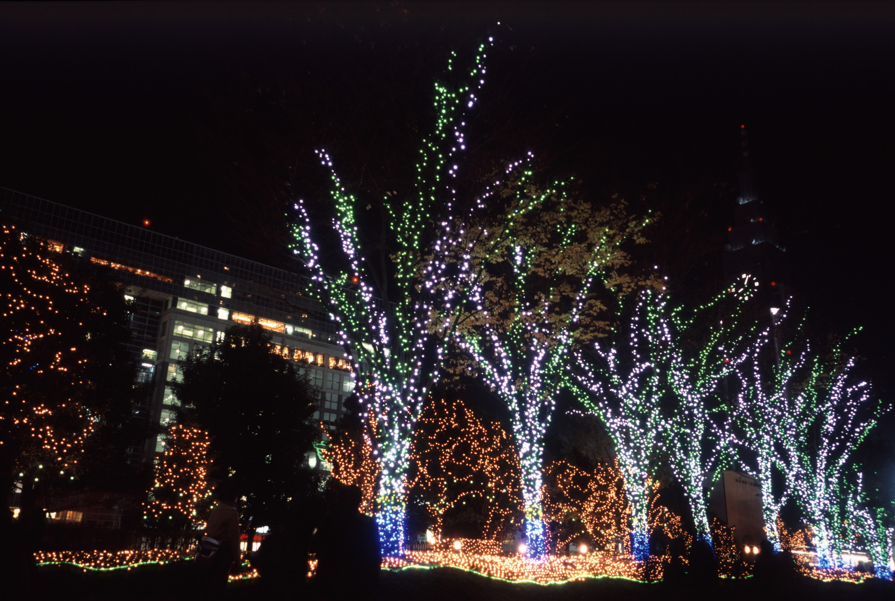 a display of christmas lights brighten a row of trees in a tokyo street