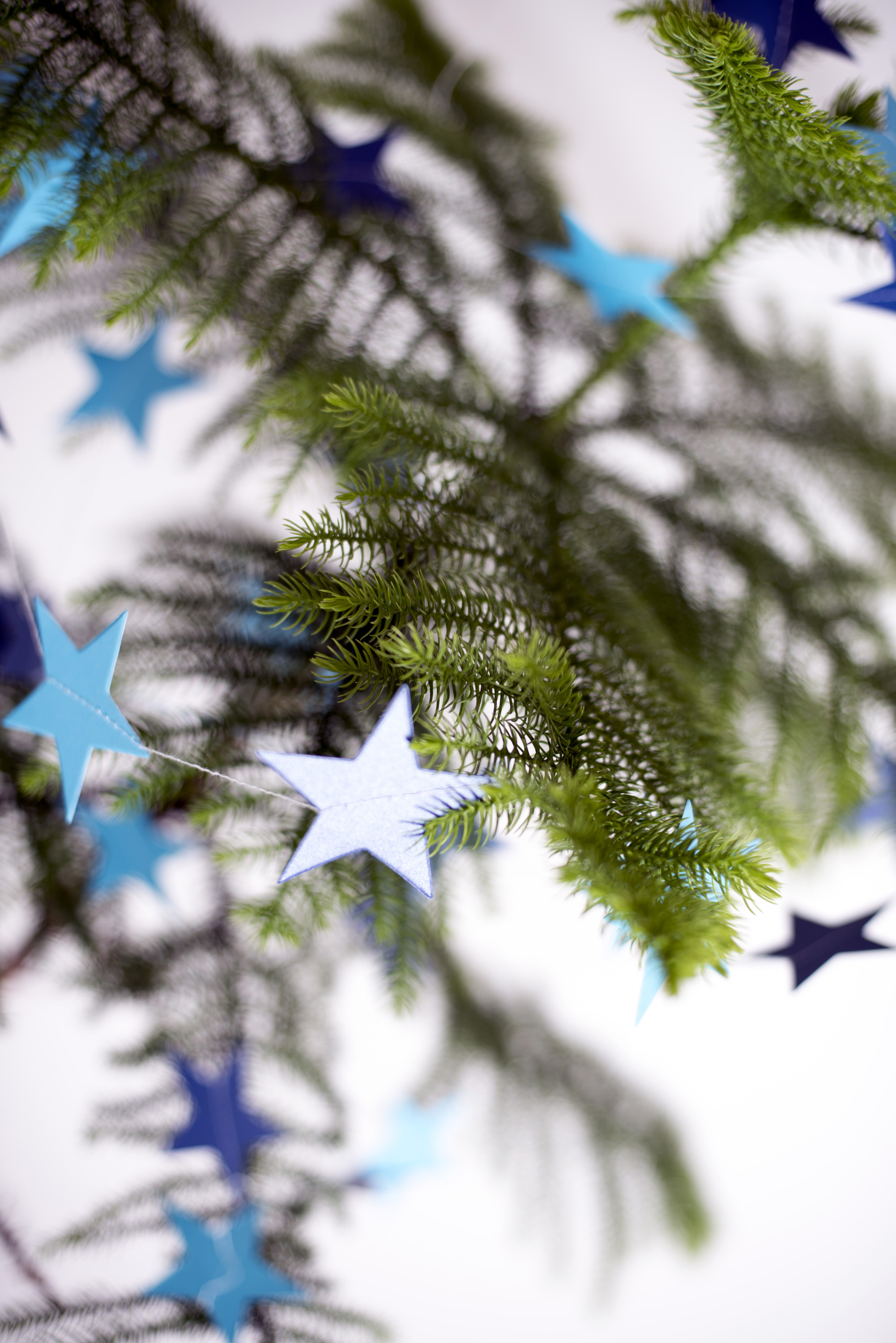 photo of simple evergreen pine christmas tree with stars free