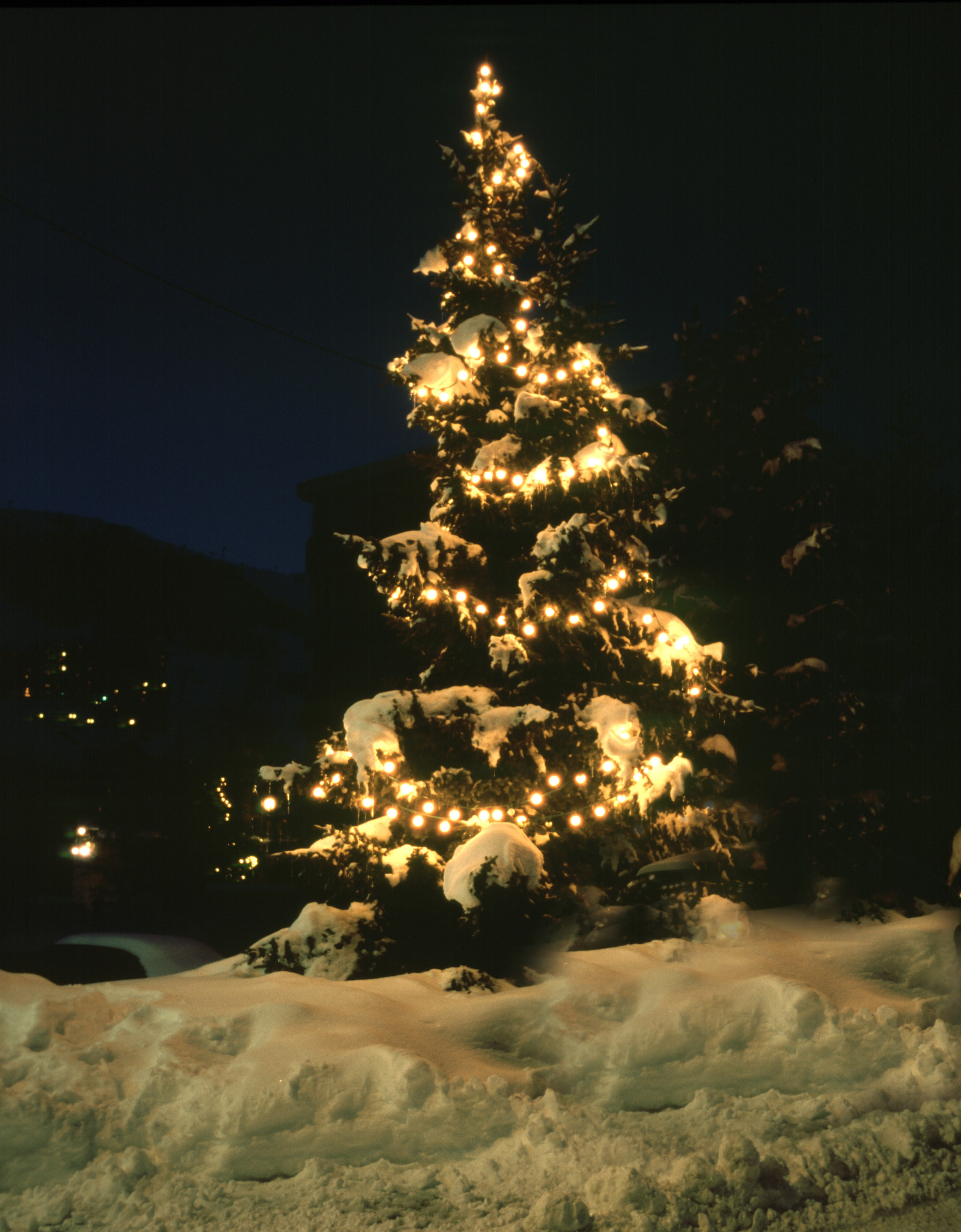 Photo of christmas tree in snow free images