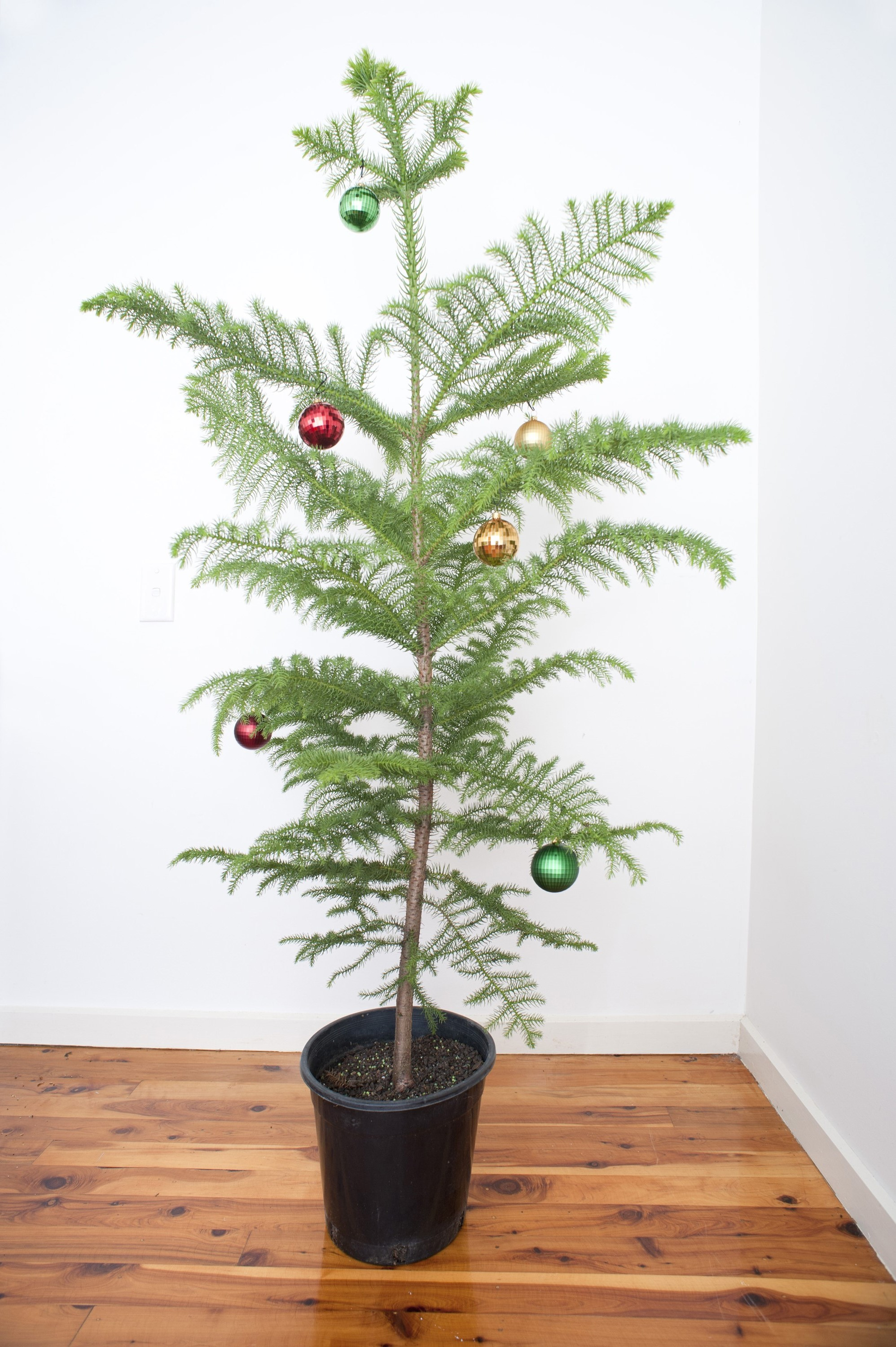 photo of christmas tree with simple decorations free christmas