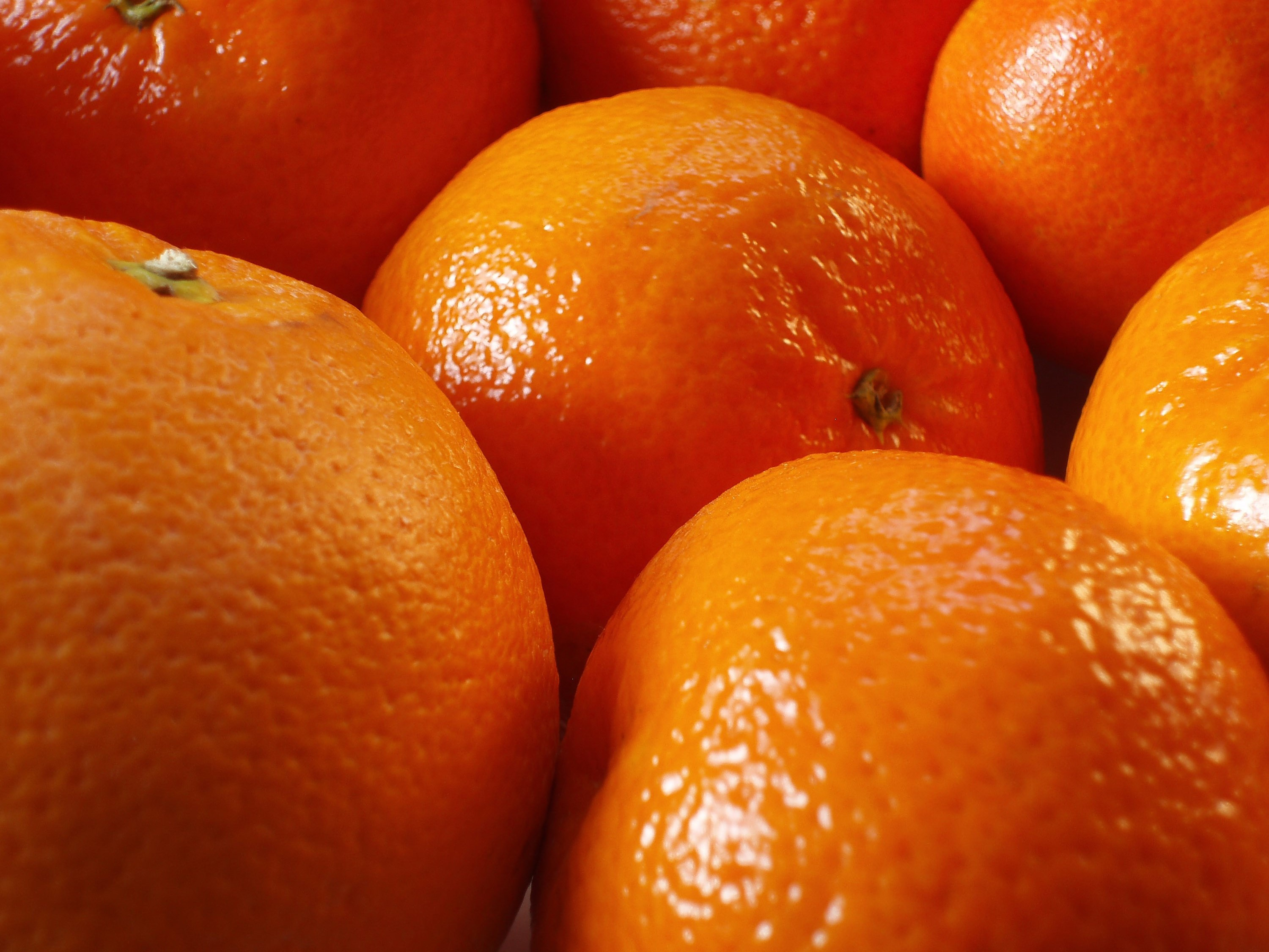 Photo of Christmas Oranges | Free christmas images