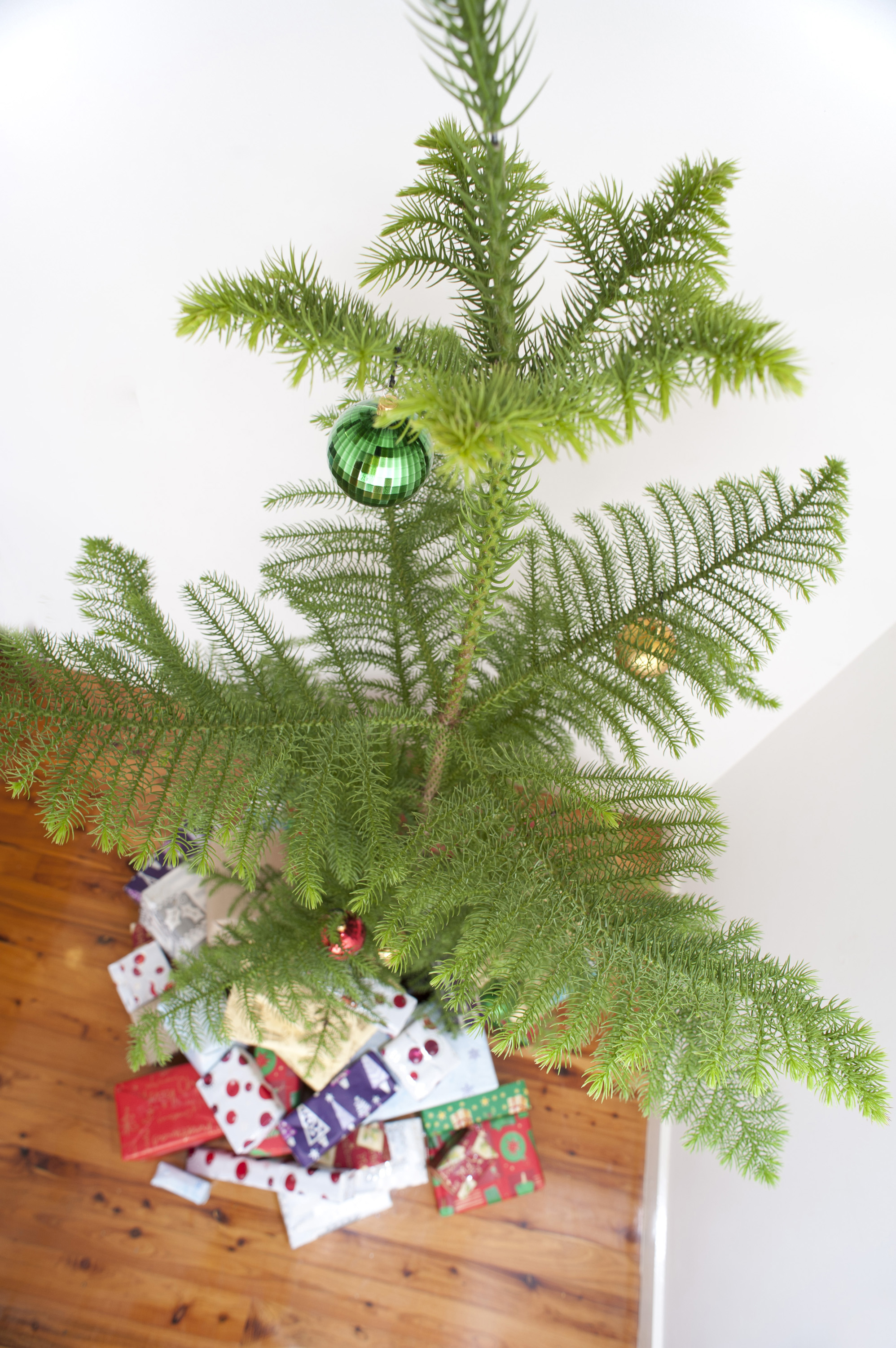 Photo of Natural pine Christmas tree and gifts | Free christmas images