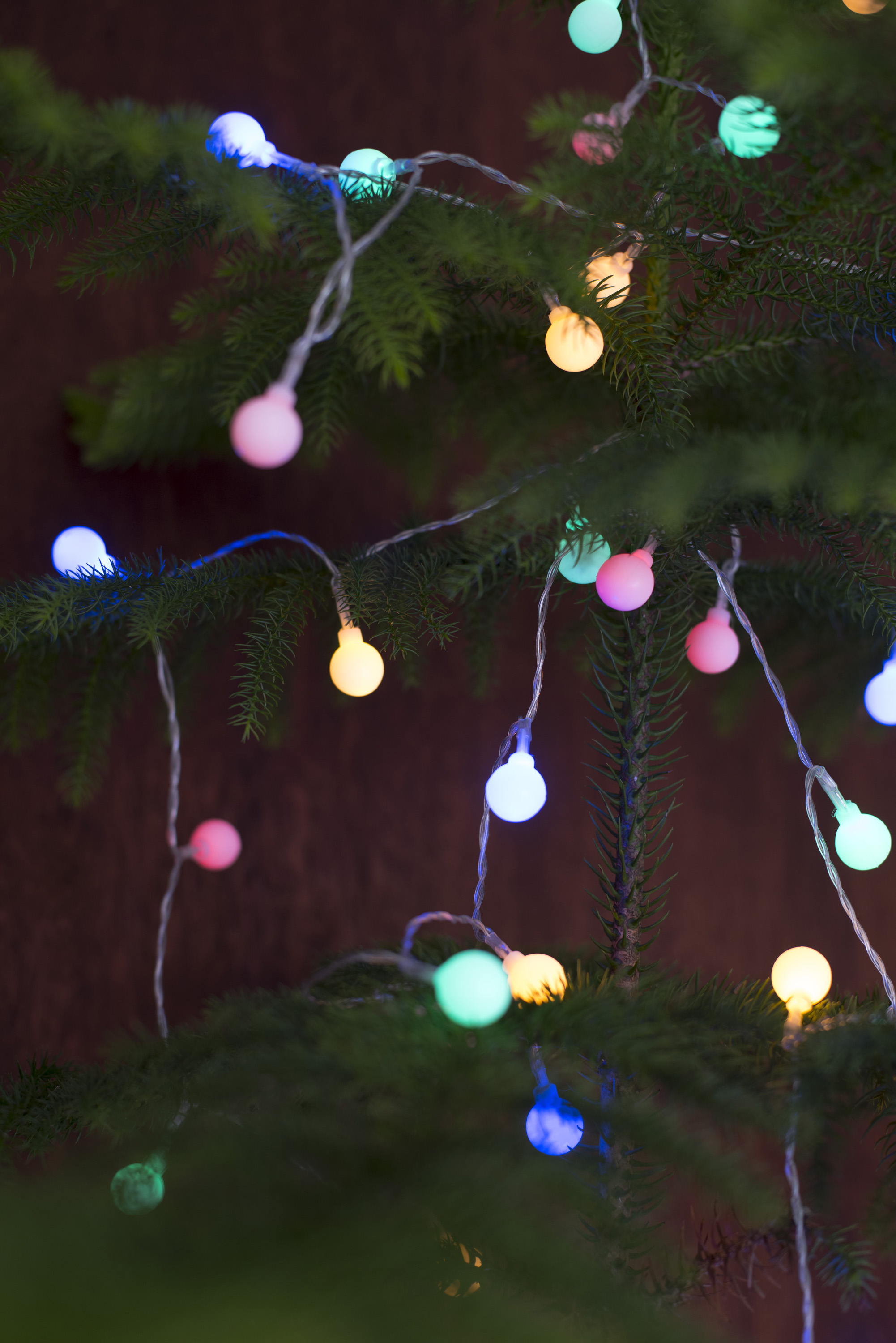 colorful glowing round christmas tree lights to celebrate the holiday season strung on a natural pine